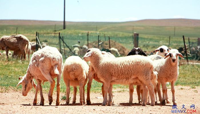 二年级亡羊补牢的道理是什么 第2张