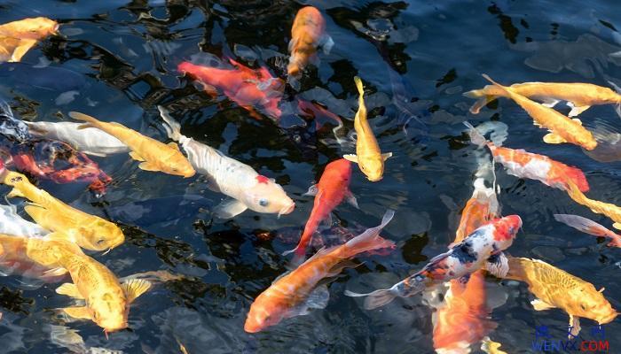 端午节挂鲤鱼旗的含义 第1张
