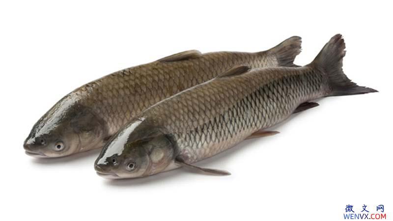 水煮鱼做法,水煮鱼制作食谱 第2张