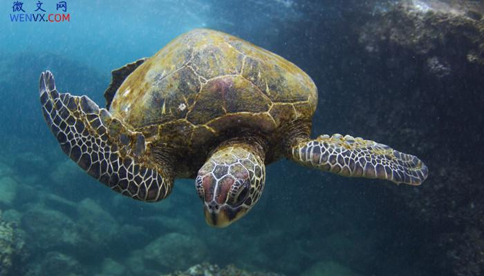 海龟和乌龟的有什么不同 第2张