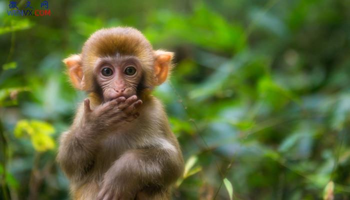 猴子分哪些种类 第1张