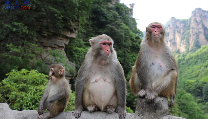 猴子分哪些种类 第2张