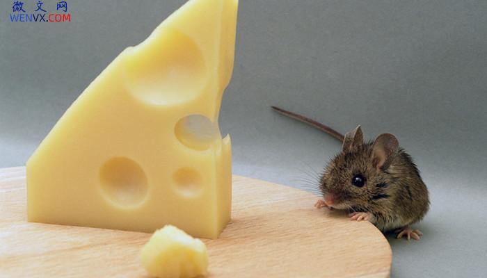 老鼠是群居还是独居 第2张