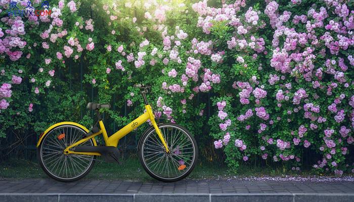自行车是谁发明的? 第1张