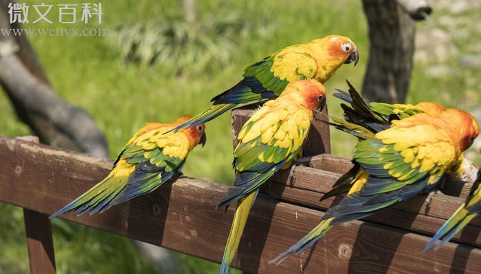 鹦鹉的外形和生活特征